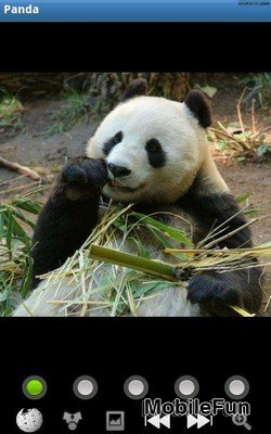 Funny Panda: Wild Animals